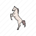 animals, dray horse, horse, mammal, mare, ponny, stallion icon
