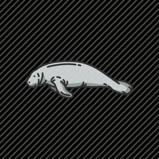 animals, aquatic mammal, mammal, marine mammal, sea cow, sirenia icon