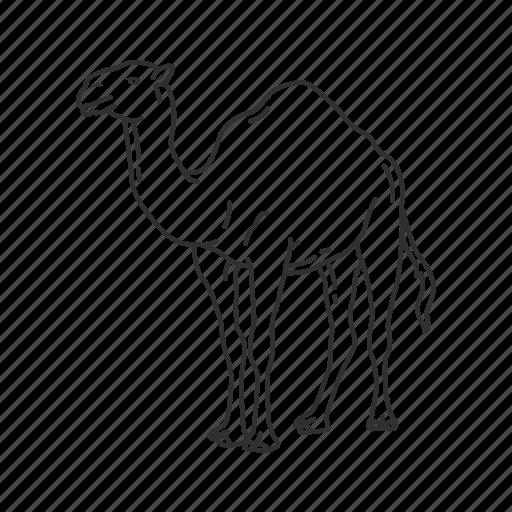 camel, camelidae family, large land mammal, one hump camel icon
