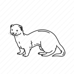 carnivorous mammal, otter, small semiaquatic mammal icon