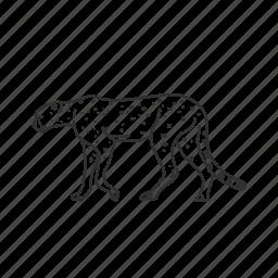 acinonyx jubatus, big cat, cheetah, felidae family, hunting leopard, medium land mammal icon
