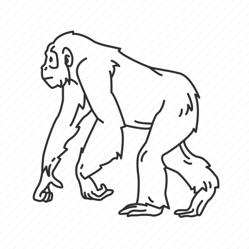 chimp, chimpanzee, hominidae family, medium land mammal, monkey icon