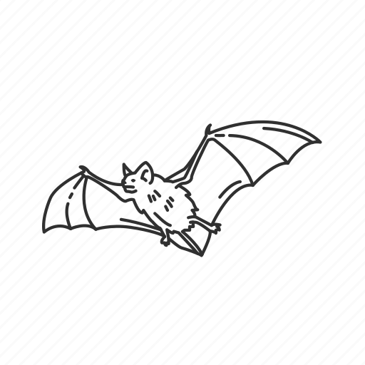bat, chiroptera order, flying mammal, webbed wings icon