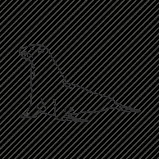 enaliarctidae family, fin-footed, pinniped, seal, semiaquatic marine mammal icon