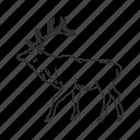 cervidae family, cervus canadensis, elk, elk antlers, large land mammal, male elk, wapiti icon