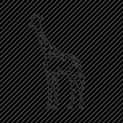 giraffa, giraffe, giraffidae family, large land animal, tallest land mammal icon