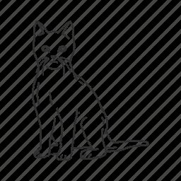 cat, domestic cat, felidae family, feline, felis catus, house cat, small land mammal icon