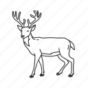buck, cervidae family, deer, deer antlers, medium land animal icon