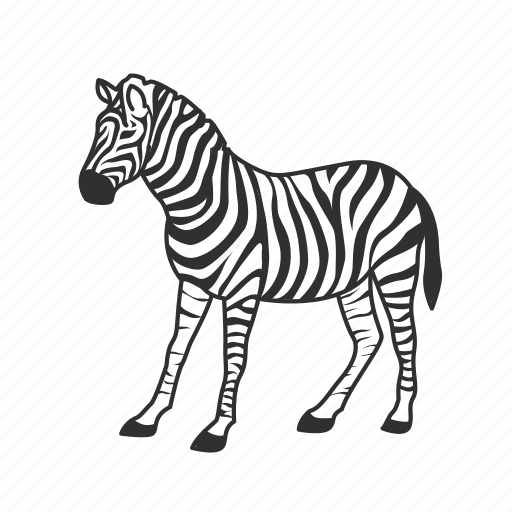 black and white striped, equidae family, large land mammal, zebra icon