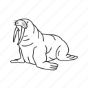 ivory tusks, large flippered marine mammal, odobenidae family, odobenus rosmarus, walrus icon