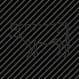 bovidae family, cattle, cow, heifer, large land mammal, milk cow icon