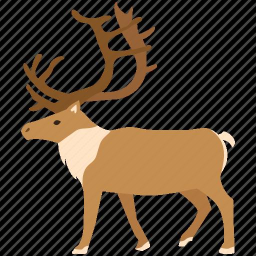 antlers, caribou, elk, hunting, reindeer, stag, trophy icon