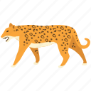 animal, big cat, camoflage, carnivorous, jaguar, leopard, predator icon