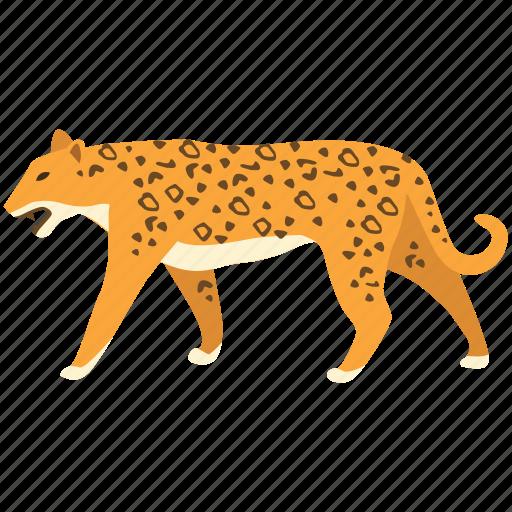 animal, big cat, camoflage, carnivorous, jaguar, leopard, predator icon