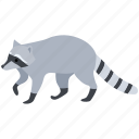 american, animal, fur, pest, raccoon, racoon, thief icon