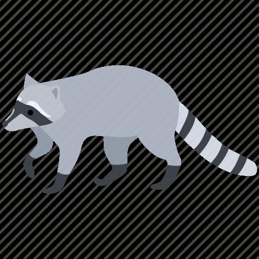 american, animal, fur, pest, raccoon, racoon, thief icon