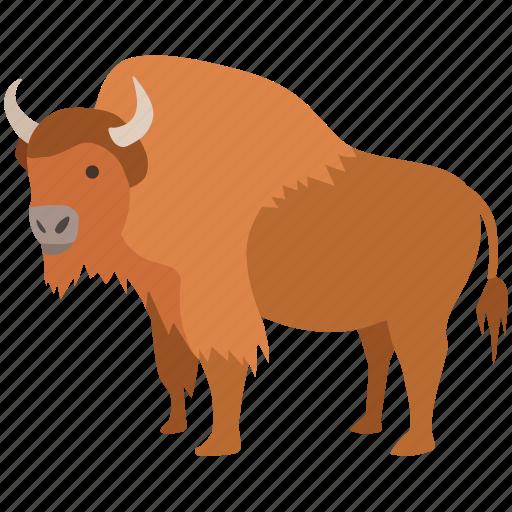 american, bison, bovine, bull, european, extinct, hunting icon