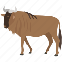 blue, brindled, game, gnu, hunting, prey, wildebeest icon