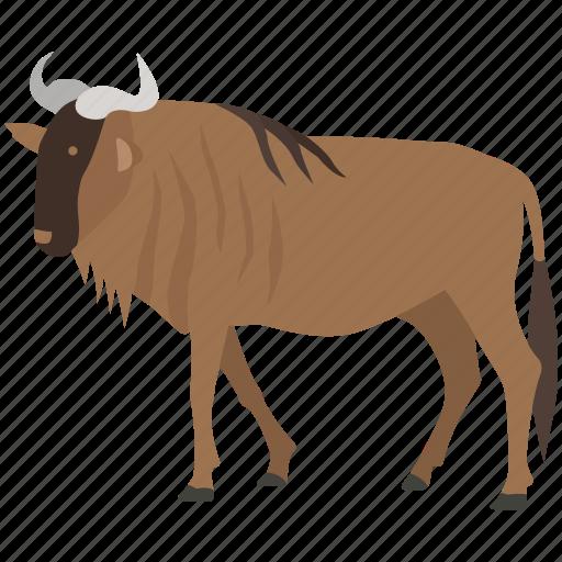 blue, brindled, game, gnu, hunting, prey, wildebeest icon