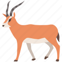 antelope, springbok, gazelle, africa, blackbuck, bushbuck, south