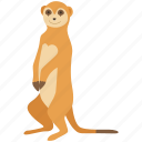 africa, zoo, weasel, mongoose, mammal, stoat, meerkat icon