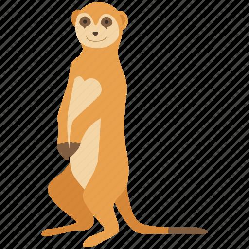 africa, mammal, meerkat, mongoose, stoat, weasel, zoo icon