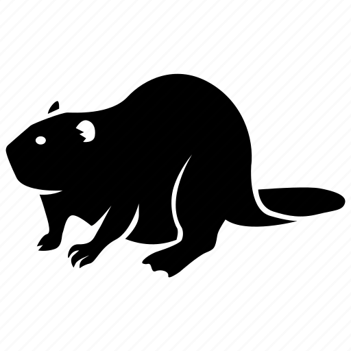 american, animal, beaver, canada, eurasian, fur, pelt icon