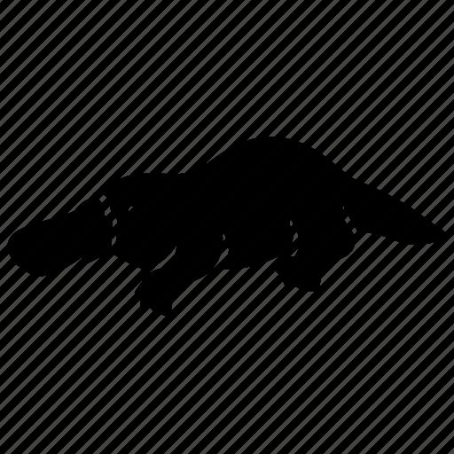 animal, australia, monotreme, platypus, rare, unusual, zoo icon