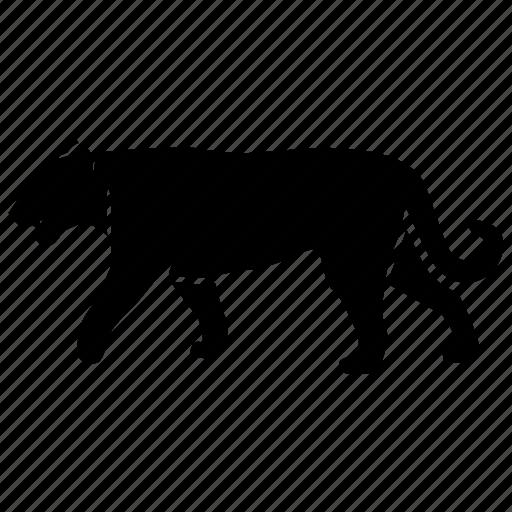 big, carnivore, cat, panther, predator, puma, stalk icon