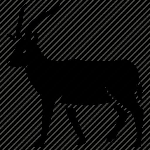 africa, antelope, blackbuck, bushbuck, gazelle, south, springbok icon