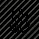 marine, nautical, seaweed, coral, reef, ocean, sea