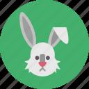 animal, bunny, meat, nature, pet, zoo