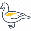 animal, duck, food, muscovy icon