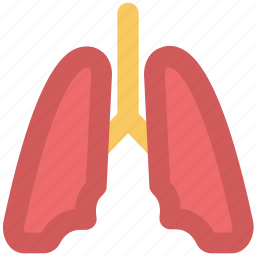 anatomy, body organ, breathe, human lungs, lungs, pulmonology icon