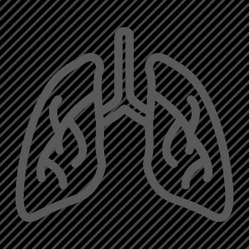 anatomy, biology, body, human, lung, lungs, organ icon