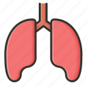 anatomy, human lung, lungs, organ icon