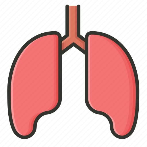 anatomy, biology, body part, human lung, lungs, medical, organ icon