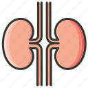 kidney, organ icon