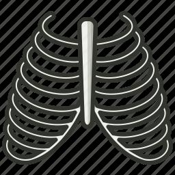 bone, health, healthcare, human, medical, rib icon