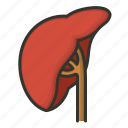 health, healthcare, liver, medical, organ, renal icon