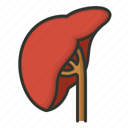 liver, organ, renal icon