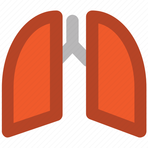 anatomy, body organ, breathe, human lungs, lungs, pulmonology icon