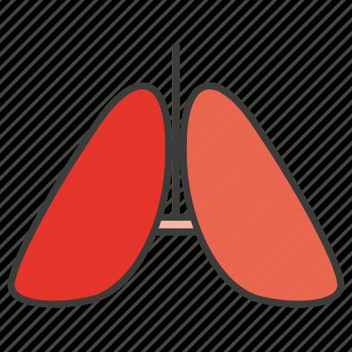 liver, organ, spleen icon