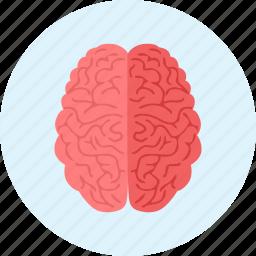 brain, brainstorm, brainstorming, medical, medicine icon
