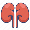 anatomy, kidney, organ, urinate icon