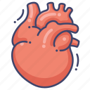 anatomy, cardiology, heart, organ icon