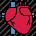 body, cardiac, heart, human, live