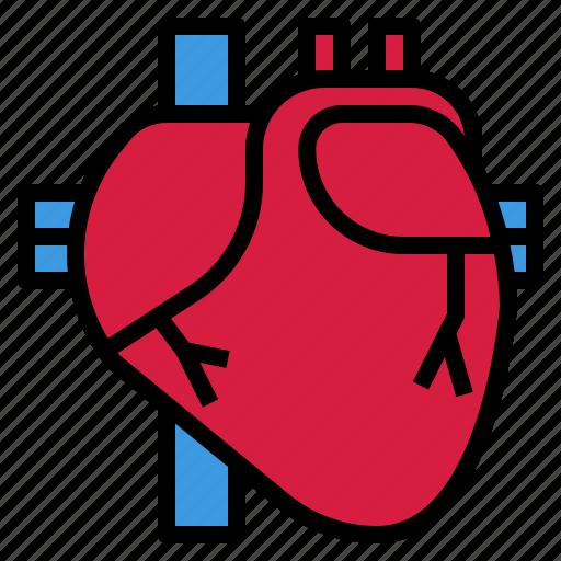 body, cardiac, heart, human, live icon