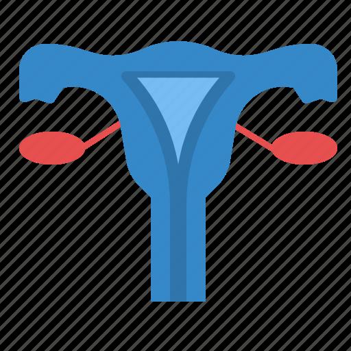 female, menstruation, ovary, reproduction, uterus icon