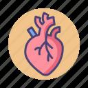 cardiac, cardiovascular, heart, organ